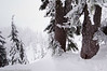 Trees in Snow<br /> Mt. Baker