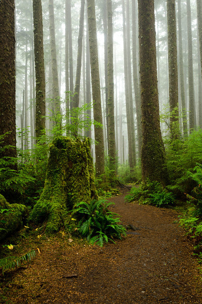 Rain Forest Trail<br /> Second Beach Trail<br /> Olympic National Park