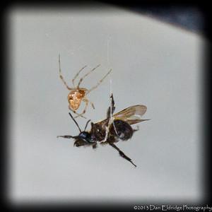 Spider v Bee
