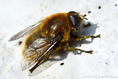 Bulb Fly 2: Revenge of the Pollinators