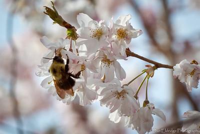 2014-04-19_Spring Hill_013
