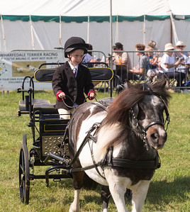 wensleydale show carriage driving PIC DM(7)