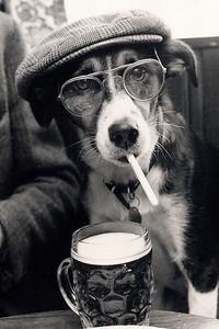 0250 DM SMOKING DOG