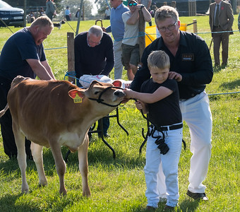 wensleydale show cows PIC DM(15)