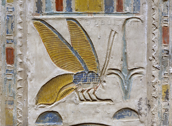 [Egypt 29894] 'Bee and rush hieroglyph at Abydos.'