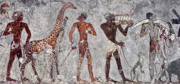 "[EGYPT 29367] 'Tribute from equatorial Africa in Rekhmire's tomb at Luxor.'  	A mural detail in Rekhmire's tombs records Nubians offering tribute in the form of giraffes, monkeys, ostrich eggs and feathers and ivory. Rekhmire was an 18th dynasty vizier (viceroy) of Southern Egypt, mayor of Thebes and steward of the Amon Temple at Karnak during the reigns of Thutmosis III and Amenhotep II. His tomb (TT 100) is located in the Sheikh Abd el Qurnah Necropolis on the Westbank at Luxor and is one of the socalled ""Tombs of the Nobles"". Photo Mick Palarczyk and Paul Smit."