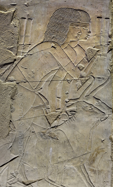 """[EGYPT 29331] 'Herding cattle in Khaemhat's tomb at Luxor.'  A well crafted relief in the tomb of Khaemhat shows two men herding cattle. Khaemhat (also known as Mahu) was an 18th dynasty royal scribe and 'Overseer of the Granaries of Upper and Lower Egypt. His tomb (TT 57) is located in the Sheikh Abd el Qurnah Necropolis on the Westbank at Luxor. It is one of the socalled """"Tombs of the Nobles"""" and dates to the reign of Amenhotep III. Photo Mick Palarczyk and Paul Smit."""