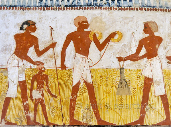 """[EGYPT 29325] 'Measuring the harvest in Menna's tomb at Luxor.'  This scene in the tomb of Menna portrays a man who is using a rope to measure a field in order to ascertain the portion of the harvest that will have to be paid as tax to the estate of the temple of Amon. Wrapped around his upper arm is spare coil of rope. He is followed by an apparently blind man who makes use of a cane and the head of a child to guide himself. The measuring dignitary is confronted by a man who is possibly the owner of the land and who is presenting a sheaf of wheat and a pointed bread. A bribe to lower the taxes?  Menna was an 18th dynasty inspector of estates and overseer of harvests and his tomb (TT 69) is located in the Sheikh Abd el Qurnah Necropolis on the Westbank at Luxor. It is one of the socalled """"Tombs of the Nobles"""" and dates to the end of the reign of Thutmosis IV and the beginning of the reign of Amenhotep III. Photo Mick Palarczyk and Paul Smit."""