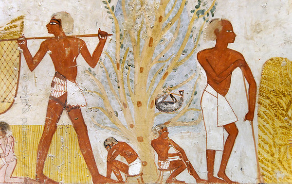 """[EGYPT 29326] 'Harvest scene in Menna's tomb at Luxor.'  This harvest scene in Menna's tomb shows a man carrying the crop in a large net suspended from a pole which rests on his shoulders. At the edge of the field two men are resting under a tree, each seated on a stool. The one on the left appears to have fallen asleep, while the other is playing a flute. A goatskin, probably filled with water, is hanging form the branches of the tree. On the right a supervisor is supporting himself with a staff. The heel of his front leg isn't resting on the ground, suggesting that he is handicapped. Menna was an 18th dynasty inspector of estates and overseer of harvests and his tomb (TT 69) is located in the Sheikh Abd el Qurnah Necropolis on the Westbank at Luxor. It is one of the socalled """"Tombs of the Nobles"""" and dates to the end of the reign of Thutmosis IV and the beginning of the reign of Amenhotep III. Photo Mick Palarczyk and Paul Smit."""