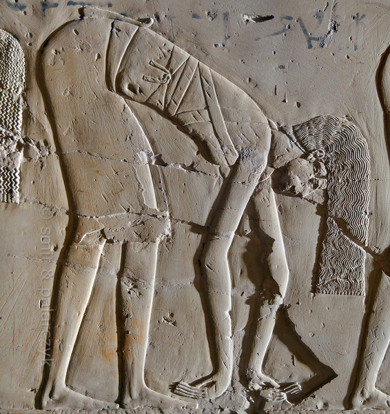 "[EGYPT 29401] 'Dancer in Kheruef's tomb at Luxor.'  	This relief detail in the tomb of Kheruef shows a female dancer who performs on the occasion of the First Jubilee (heb sed) festival of Amenhotep III (in year 30 of his reign). Kheruef was steward of Queen Tiy, the wife of Amenhotep III, and played an important role during festivals. His (unfinished) tomb (TT 192) can be found in the Asasif Necropolis on the Westbank at Luxor. It is one of the socalled ""Tombs of the Nobles"". Photo Mick Palarczyk and Paul Smit."