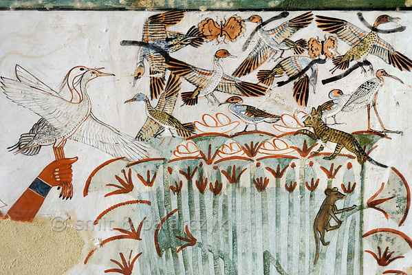 """[EGYPT 29320] 'Papyrus swamp in Menna's tomb at Luxor.'  This papyrus swamp is part of a hunting scene in the tomb of Menna. Ducks and other birds are nesting in the swamp and at least five nests with eggs are depicted. The latter are about to be plundered by a striped cat and a rodent. The fowl are hunted with throwing sticks, five of which are depicted among the startled birds. Menna was an 18th dynasty inspector of estates and overseer of harvests. His tomb (TT 69) can be found in the Sheikh Abd el Qurnah Necropolis on the Westbank at Luxor. It is one of the socalled """"Tombs of the Nobles"""" and dates to the end of the reign of Thutmosis IV and the beginning of the reign of Amenhotep III. Photo Mick Palarczyk and Paul Smit."""