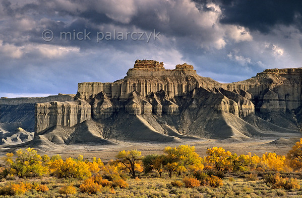 [USA.UTAH 28176] 'Fremont valley in autumn.'  	The yellow autumn colours of the floodplain of the Fremont River form a stark contrast with the cliffs and badlands of the Blue Valley Benches west of Hanksville. The grey shale and sandstone is part of the Mancos Shale Formation and dates from the Cretaceous period. Photo Mick Palarczyk.