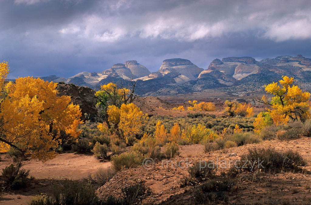 [USA.UTAH 28206] 'Pleasant Creek.'  Cottonwoods in autumn garb line the banks of Pleasant Creek, a little river that periodically drains floodwater from the elongated depression of the Water Pocket Fold in Capitol Reef National Park. Here we are looking to the west with the western rim of the Fold on the horizon. Photo Mick Palarczyk.