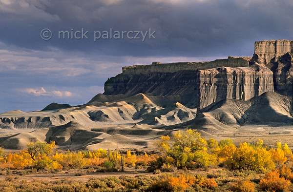 [USA.UTAH 28173] 'Fremont valley in autumn.'  The yellow autumn colours of the floodplain of the Fremont River form a stark contrast with the cliffs and badlands of the Blue Valley Benches west of Hanksville. The grey shale and sandstone is part of the Mancos Shale Formation and dates from the Cretaceous period. Photo Mick Palarczyk.