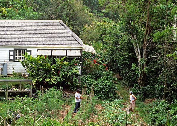 [ANTILLES.SABA 25.498] 'Ecolodge reastaurant.'	 Surrounded by its own vegetable garden, the restaurant of the ecological oriented Ecolodge lies surrounded by the rain forest of Mt.Scenery's southern slope. Photo Mick Palarczyk.