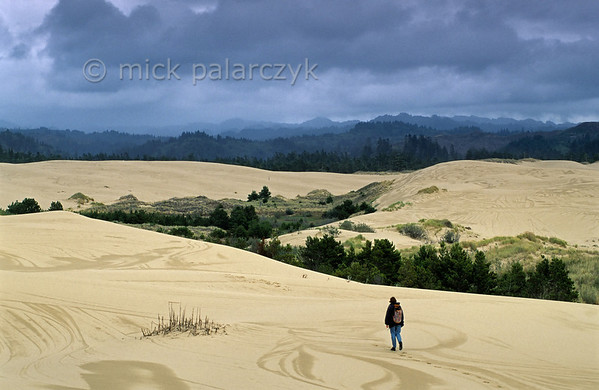[USA.OREGON 28792] 'Oregon Dunes near Lakeside.'  	The Oregon Dunes stretch along the Pacific coast between Coos Bay and Florence for nearly 90 km. Some of the largest oceanfront dunes in the world can be found here. In this picture we are looking inland in the direction of the transition forest, where the ocean-based ecosystem changes to a land-based ecosystem. Photo Mick Palarczyk.