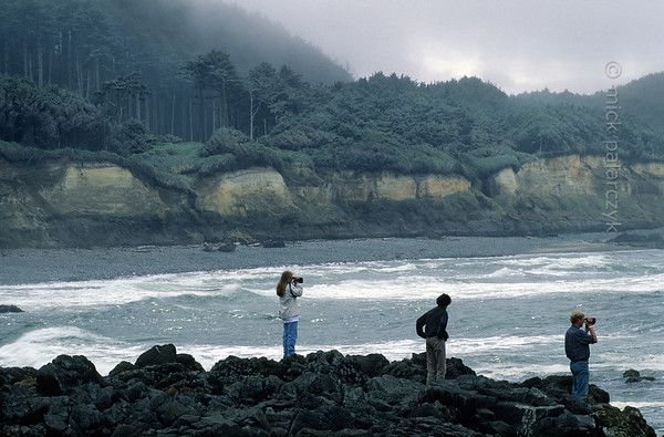 [USA.OREGON 28785] 'Seal watching at Strawberry Hill.'  	The small promontory of Strawberry Hill, 6 km south of Yachats, is a good stake-out for observing seals. It also offers a good view of the rainforest covering the coastal cliffs. Photo Mick Palarczyk.
