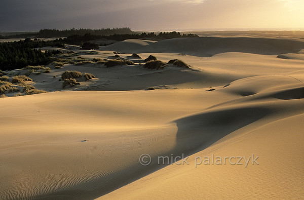 [USA.OREGON 28793] 'Oregon Dunes near Lakeside.'  	The Oregon Dunes stretch along the Pacific coast between Coos Bay and Florence for nearly 90 km. Some of the largest oceanfront dunes in the world can be found here. Photo Mick Palarczyk.