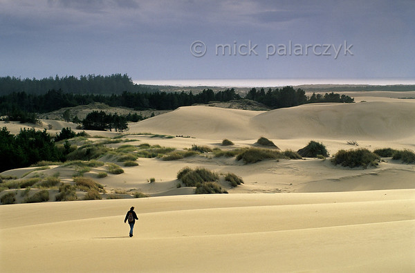 [USA.OREGON 28794] 'Oregon Dunes near Lakeside.'  	The Oregon Dunes stretch along the Pacific coast between Coos Bay and Florence for nearly 90 km. Some of the largest oceanfront dunes in the world can be found here. Photo Mick Palarczyk.