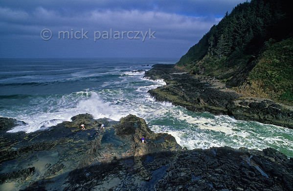 [USA.OREGON 28783] 'Gathering clams.'  	A family is gathering clams on the black volcanic shore at Devil's Churn, a narrow inlet near Cape Perpetua, south of Yachats. Photo Mick Palarczyk.