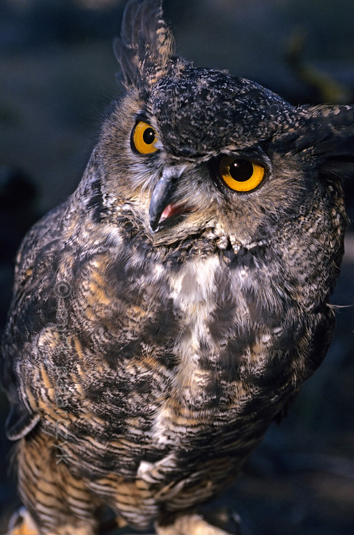 [USA.OREGON 28855]
