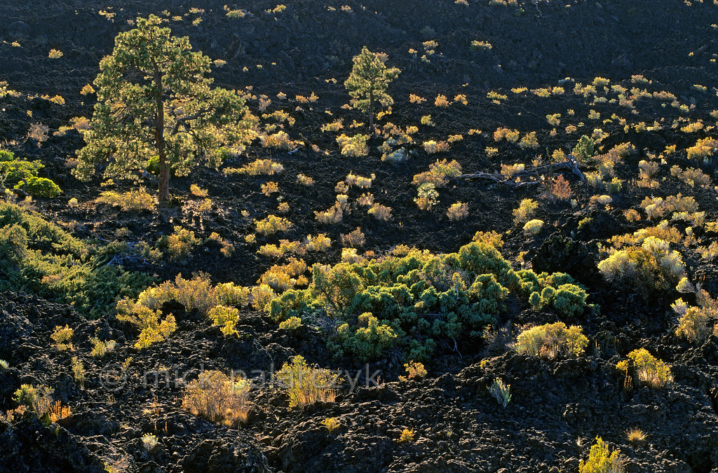 [USA.OREGON 28868]