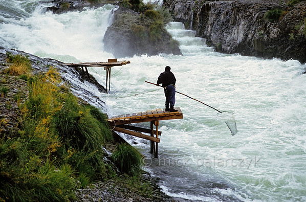 [USA.OREGON 28844] 'Indian fisher using dipnet.'  At Sherars Falls, 10 km north of Maupin, a Native American of the Warm Springs tribe is fishing in the Deschutes River, using a dipnet. When a fish enters the net the force can be so big that the fisher is pulled from his rickety platform. So for safety reasons he has a rope tied round his waist, securing him to the shore. Only the inhabitants of the Warm Springs Reservation (which is situated further south) have the privilege of fishing this way. The platforms used in this way of fishing are built during low water levels and are the property of a family. Photo Mick Palarczyk.