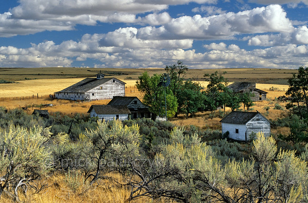 [USA.OREGON 28862] 'Deserted farm near Kent.'  	Deserted farm on the plains of central Oregon, northwest of the village of Kent and 25 km east of Maupin. Photo Mick Palarczyk.