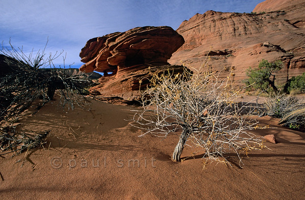 "[USA.UTAH 28070] 'Small tree.'  	A tiny ""tree"" and giant mushrooms sculpted out of layered sandstone add to the sensation of otherworldliness a hiker experiences when trekking through the Paria Canyon. Photo Paul Smit."