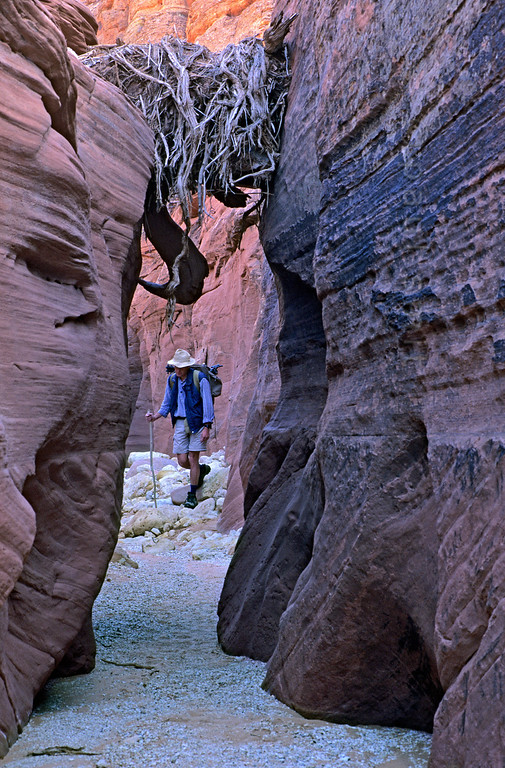 [USA.UTAH 28093] 'Wire Pass Canyon.'  	During flashfloods in the Wire Pass Canyon, a branch canyon of the Buckskin Gulch, branches and stones are transported through the narrow gulch at great speed. Some of them get stuck between opposing walls, reminder the hiker how dangerous this environment can be during rainy periods. Photo Paul Smit.