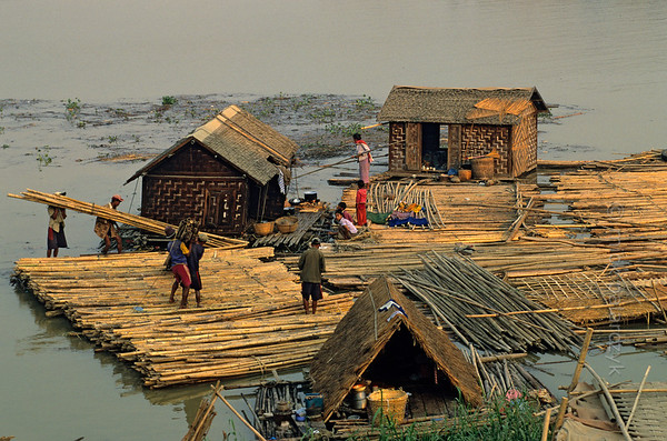 [BURMA 25.074] 'Bamboo rafts at Mandalay.'  	At Mandalay, bamboo poles, transported down river in the form of rafts, are about to be carried up the Irrawaddy embankment by a workforce that is housed in floating huts. Photo Mick Palarczyk.
