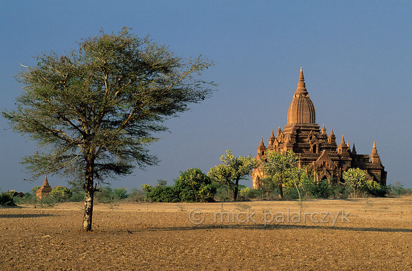 [BURMA 24.943] 'Bagan plain near Pwasaw.'  	Cactoid trees surround a small temple on the Bagan plain west of Pwasaw village. Photo Mick Palarczyk.