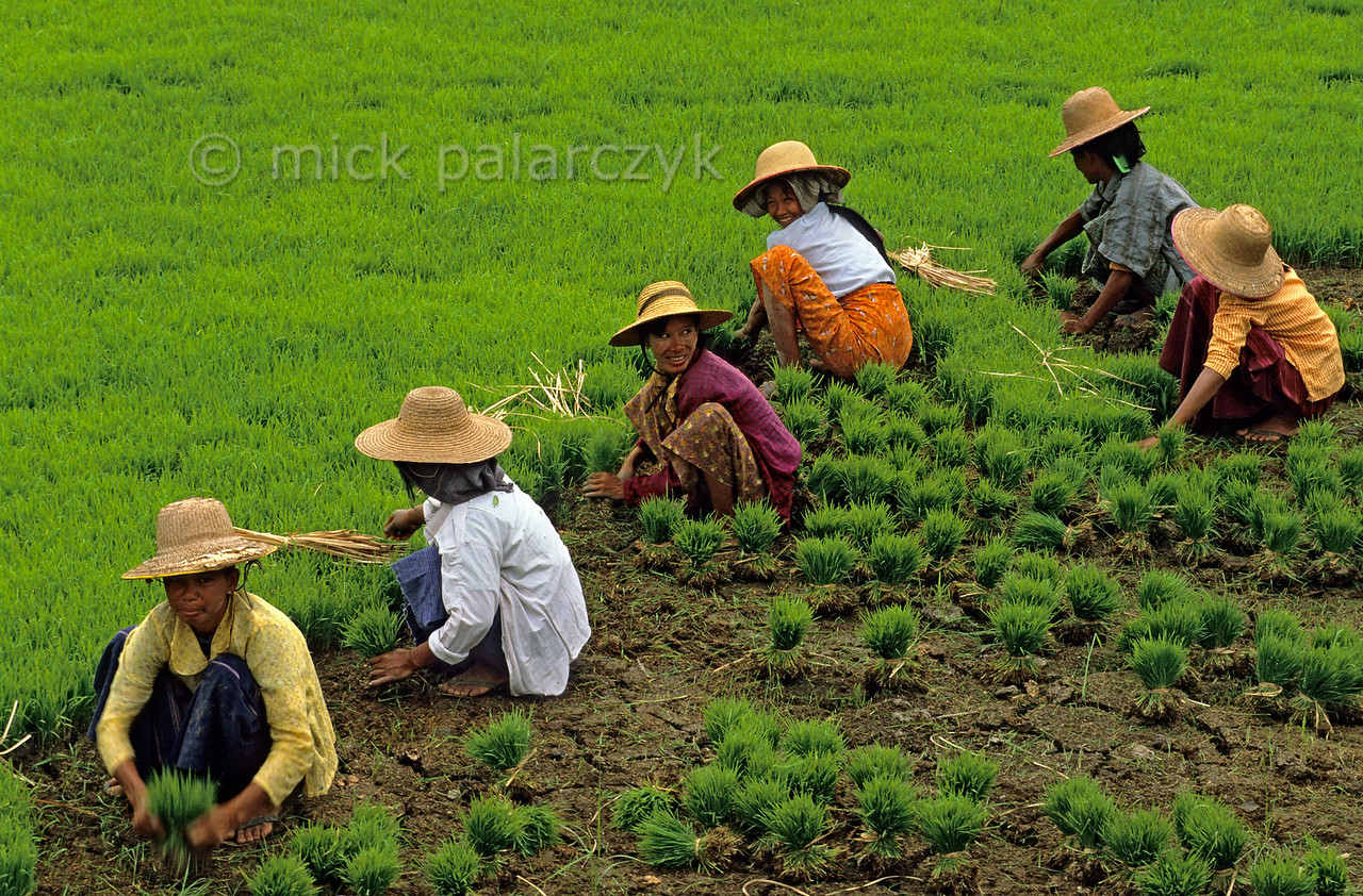 [BURMA 24.975]
