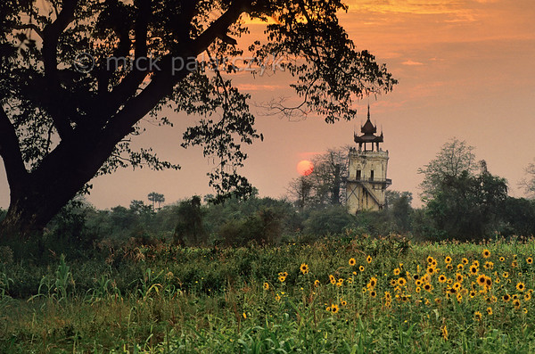 [BURMA 25.016] 'Former royal city of Inwa.'  	Within the walls of the former royal city of Inwa, maize and sunflowers are now grown, overseen by the leaning Nanmyin watchtower, the only remnant of the royal palace. Photo Mick Palarczyk.