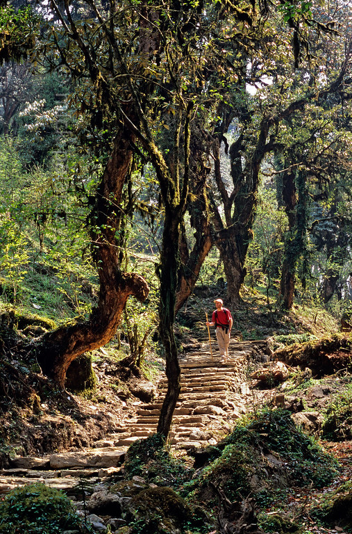 [NEPAL 27146] 'Mountain path near Tadapani.'  	A stepped mountain path in the Annapurna Conservation Area leads down from the village of Tadapani into the valley of the Bhurungdi Khola. Photo Mick Palarczyk.