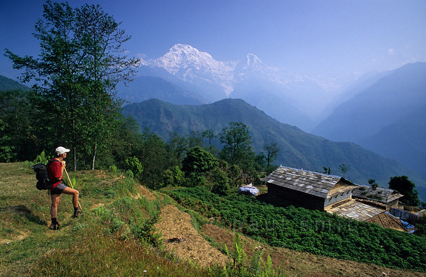 [NEPAL 27164] 'Ghandrung with Annapurna South.'  The white peak of Annapurna South towers above the village of Ghandrung in the Annapurna Conservation Area. Photo Paul Smit.
