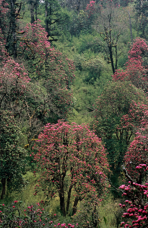 [NEPAL 27130]