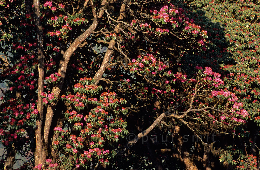 [NEPAL 27076]