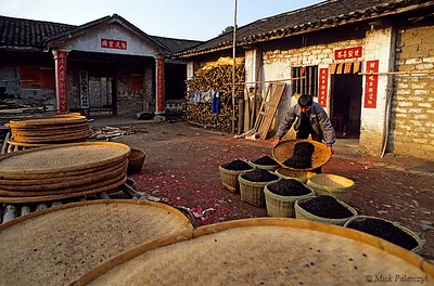 [CHINA.GUANGXI 25.224] 'Gathering 'douchy'.' At Daning, north-east of Hexian, after having been dried on big round plates, this worker is gathering 'douchy' in baskets. 'Douchy' are fermented soya beans which are used as a food spice. Photo Mick Palarczyk.