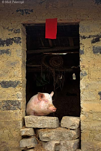[CHINA.GUANGDONG 25.195]
