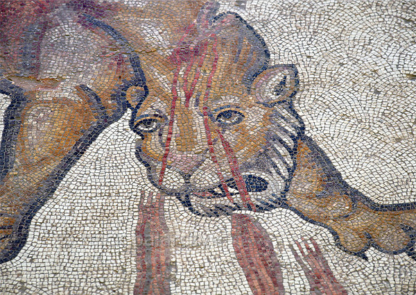 """[TURKEY.EAST 29278] 'Wounded lion in Byzantine mosaic in Urfa.'  In a hunting scene, a lion is bleeding from a wound in the neck, inflicted by the Amazon Melanippe. The 5/6 th century floor mosaic can be found in the """"Villa of the Amazons"""", a palatial house, that probably belonged to an important administrator of the Eastern Roman (Byzantine) Empire, who lived in Edessa (nowadays called Urfa). The remains of the villa were discovered in 2006 near the center of Urfa. Photo Mick Palarczyk."""