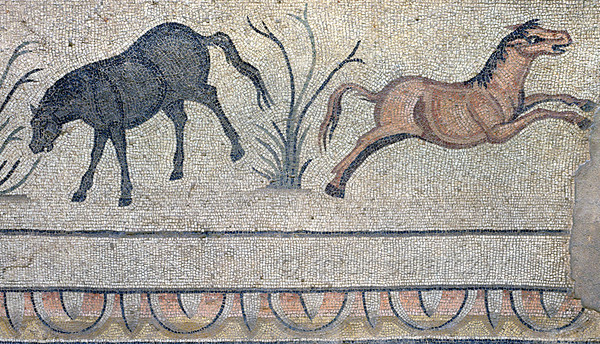 "[TURKEY.EAST 29303] 'Horses in Byzantine mosaic in Urfa.'  	In Urfa (the Edessa of the antique period) the ""Villa of the Amazons"" probably belonged to an important administrator of the Eastern Roman (Byzantine) Empire. Twelve rooms in this villa have preserved 5/6 th century floor mosaics. Some of them are quite large, such as panels depicting the life of Achilles and hunting Amazon queens. The border zones of these large tableaus are adorned with smaller scenes, mostly depicting animals, such as these horses. Photo Mick Palarczyk."