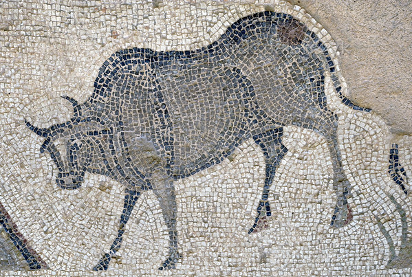 "[TURKEY.EAST 29299] 'Cow in Byzantine mosaic in Urfa.'  	In Urfa (the Edessa of the antique period) the ""Villa of the Amazons"" probably belonged to an important administrator of the Eastern Roman (Byzantine) Empire. Twelve rooms in this villa have preserved 5/6 th century floor mosaics. Some of them are quite large, such as panels depicting the life of Achilles and hunting Amazon queens. The border zones of these large tableaus are adorned with smaller scenes, mostly depicting animals, such as this cow. Photo Mick Palarczyk."