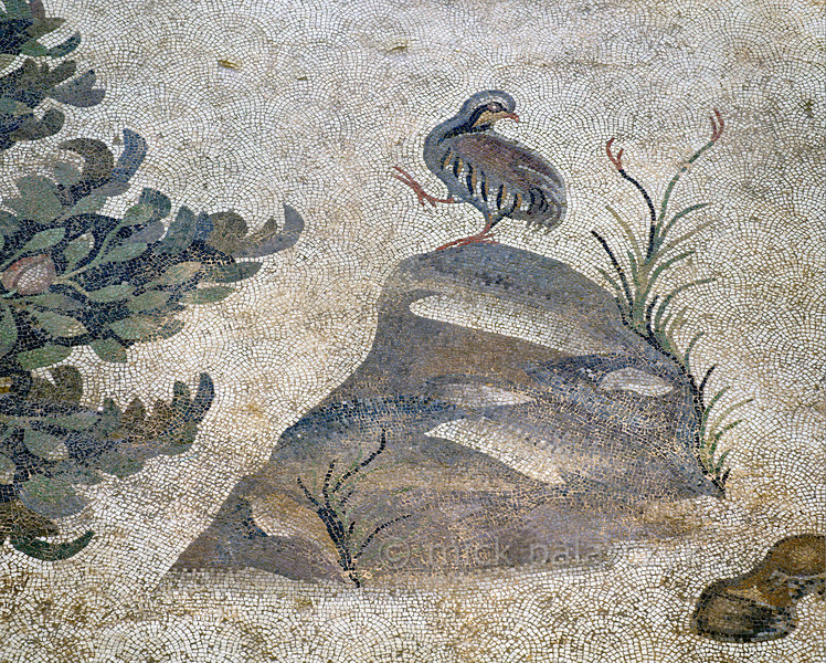"""[TURKEY.EAST 29279] 'Partridge in Byzantine mosaic in Urfa.'  A partridge standing on a rock is part of a large hunting scene with several animals and Amazons. The 5/6 th century floor mosaic can be found in the """"Villa of the Amazons"""", a palatial house, that probably belonged to an important administrator of the Eastern Roman (Byzantine) Empire, who lived in Edessa (nowadays called Urfa). The remains of the villa were discovered in 2006 near the center of Urfa. Photo Mick Palarczyk."""