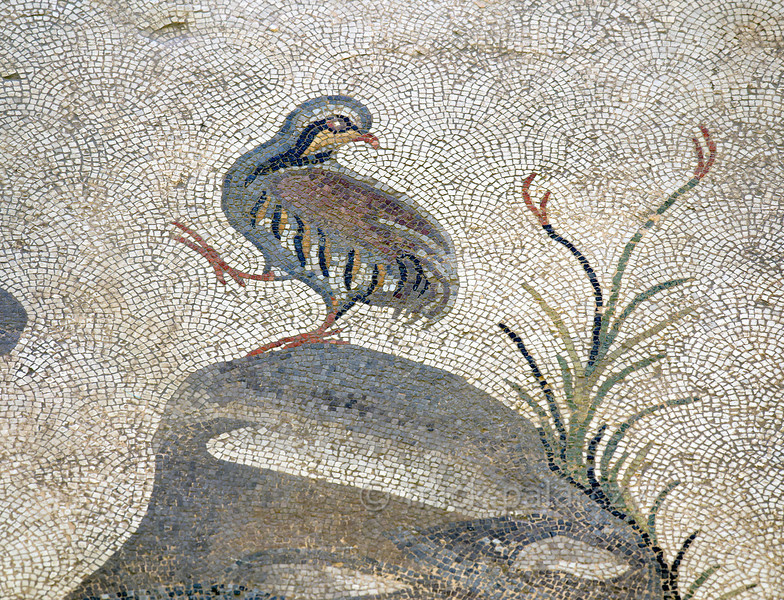 "[TURKEY.EAST 29280] 'Partridge in Byzantine mosaic in Urfa.'  	A partridge standing on a rock is part of a large hunting scene with several animals and Amazons. The 5/6 th century floor mosaic can be found in the ""Villa of the Amazons"", a palatial house, that probably belonged to an important administrator of the Eastern Roman (Byzantine) Empire, who lived in Edessa (nowadays called Urfa). The remains of the villa were discovered in 2006 near the center of Urfa. Photo Mick Palarczyk."