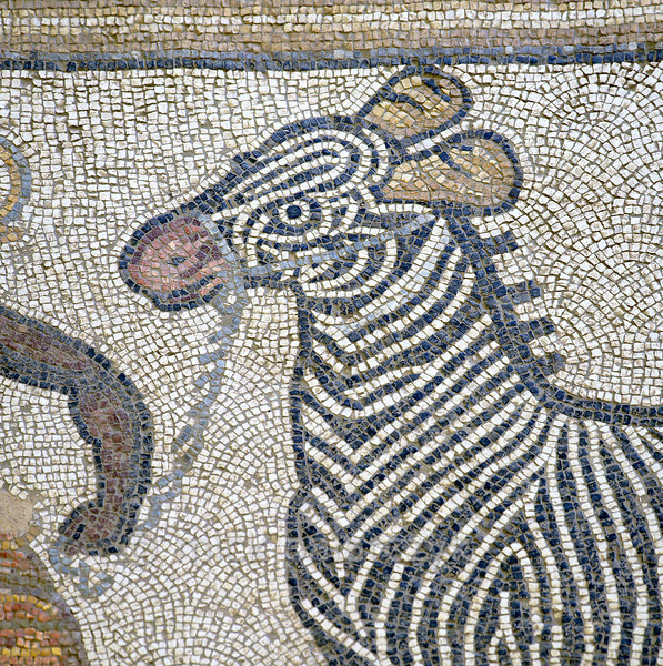 """[TURKEY.EAST 29286] 'Zebra in Byzantine mosaic in Urfa.'  Tesserae (mosaic stones) made of rocks from the riverbed of the Euphrates were used to depict a black man leading a zebra. The 5/6 th century floor mosaic can be found in the """"Villa of the Amazons"""", a palatial house, that probably belonged to an important administrator of the Eastern Roman (Byzantine) Empire, who lived in Edessa (nowadays called Urfa). The remains of the villa were discovered in 2006 near the center of Urfa, which is located 45 km south of the Euphrates. Photo Mick Palarczyk."""