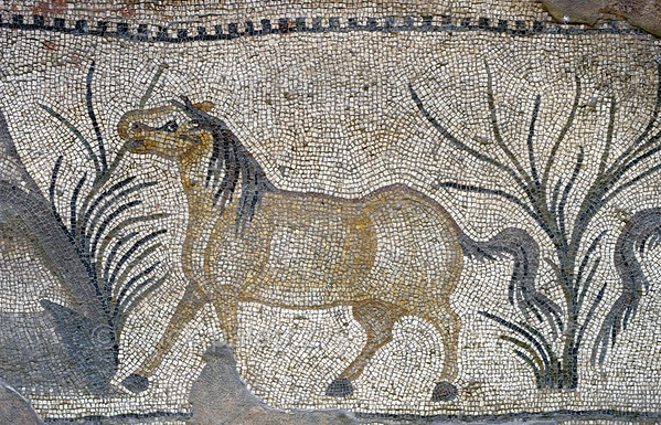"[TURKEY.EAST 29301] 'Horse in Byzantine mosaic in Urfa.'  	In Urfa (the Edessa of the antique period) the ""Villa of the Amazons"" probably belonged to an important administrator of the Eastern Roman (Byzantine) Empire. Twelve rooms in this villa have preserved 5/6 th century floor mosaics. Some of them are quite large, such as panels depicting the life of Achilles and hunting Amazon queens. The border zones of these large tableaus are adorned with smaller scenes, mostly depicting animals, such as this grazing horse. Photo Mick Palarczyk."