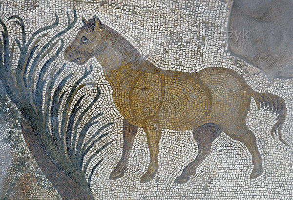 "[TURKEY.EAST 29300] 'Horse in Byzantine mosaic in Urfa.'  	In Urfa (the Edessa of the antique period) the ""Villa of the Amazons"" probably belonged to an important administrator of the Eastern Roman (Byzantine) Empire. Twelve rooms in this villa have preserved 5/6 th century floor mosaics. Some of them are quite large, such as panels depicting the life of Achilles and hunting Amazon queens. The border zones of these large tableaus are adorned with smaller scenes, mostly depicting animals, such as this horse. Photo Mick Palarczyk."