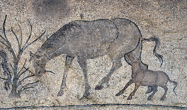 "[TURKEY.EAST 29302] 'Horse and foal in Byzantine mosaic in Urfa.'  	In Urfa (the Edessa of the antique period) the ""Villa of the Amazons"" probably belonged to an important administrator of the Eastern Roman (Byzantine) Empire. Twelve rooms in this villa have preserved 5/6 th century floor mosaics. Some of them are quite large, such as panels depicting the life of Achilles and hunting Amazon queens. The border zones of these large tableaus are adorned with smaller scenes, mostly depicting animals, such as this grazing horse and its suckling foal. Photo Mick Palarczyk."