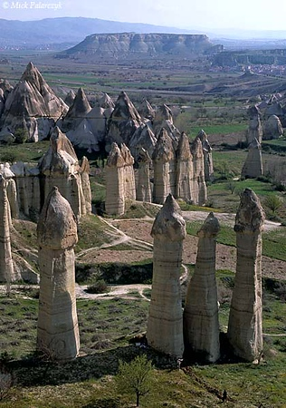 [TURKEY.CENTRAL 26820 'Fairy chimneys in White Valley-4.'  	A forest of 'fairy chimneys' catches the early sunlight on a spring morning in the White (Baglidere) Valley, north of the Cappadocian village of Göreme. These huge pillars, called peribacalar in Turkish, are sculptured by erosion from soft volcanic tuff layers. They are topped by a cap of harder more solidified ash (ignimbrite). Photo Mick Palarczyk.